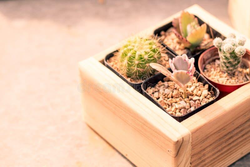 Cactus sullo scrittorio in vaso della scatola di legno Stile minimo nave ambiente fondo di idea di concetto del giardino dell'int fotografia stock