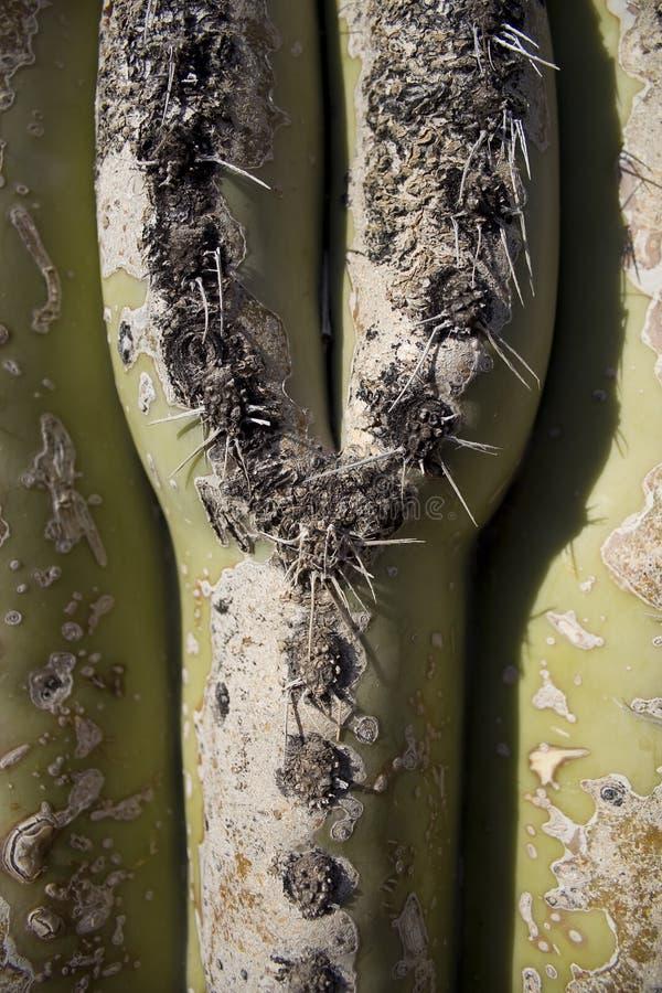 Cactus in sun stock image