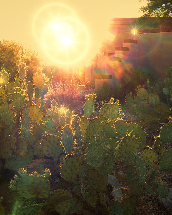 Cactus with Sun and Sunflare royalty free stock photo