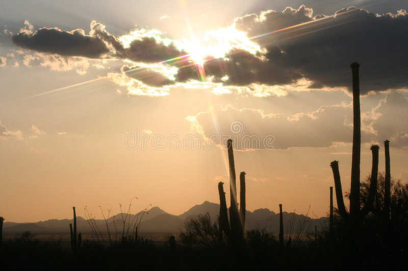 Download Cactus Sunset Stock Images - Image: 952874