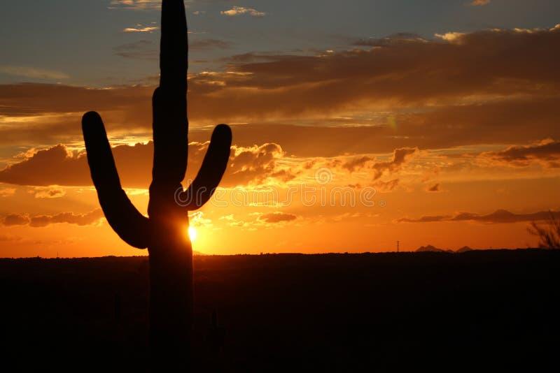 Cactus Sunset royalty free stock image