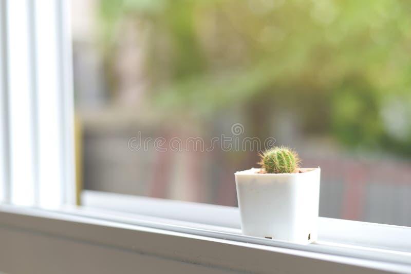 Cactus sur la fenêtre photographie stock