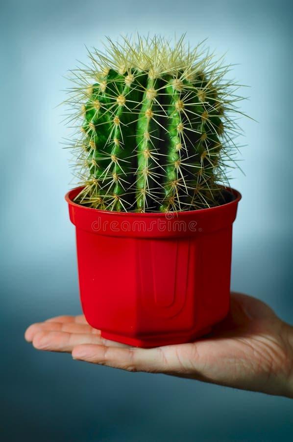 Cactus sur la main photo stock