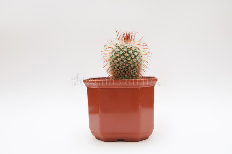 Cactus sur un fond simple photographie stock libre de droits