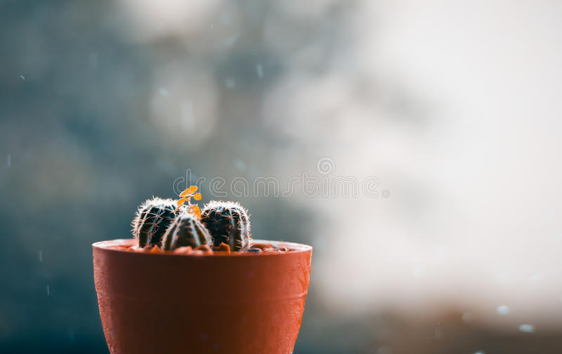 Cactus on the terrace with blur rainy day background stock photo