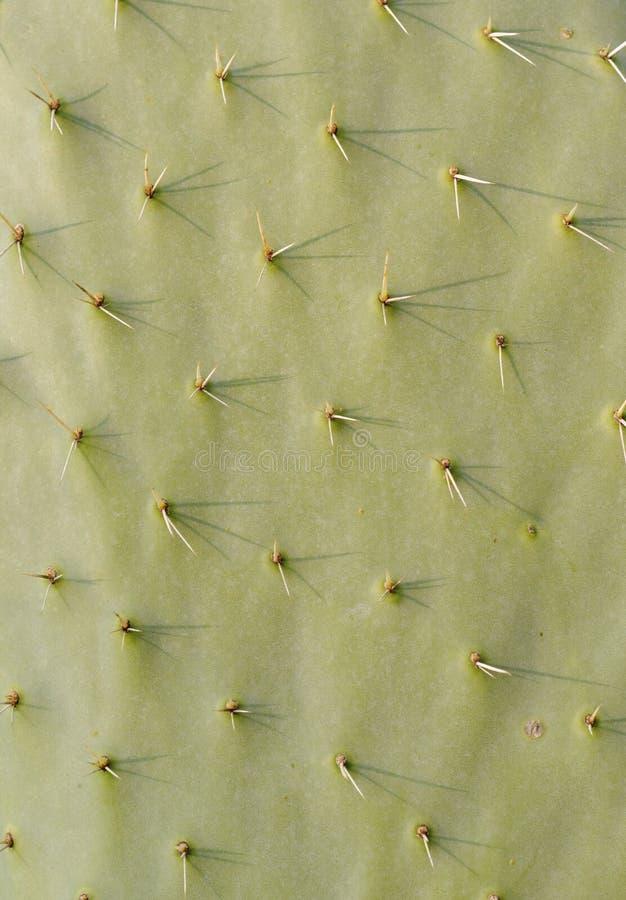 Free Cactus Texture Stock Photo - 28488270