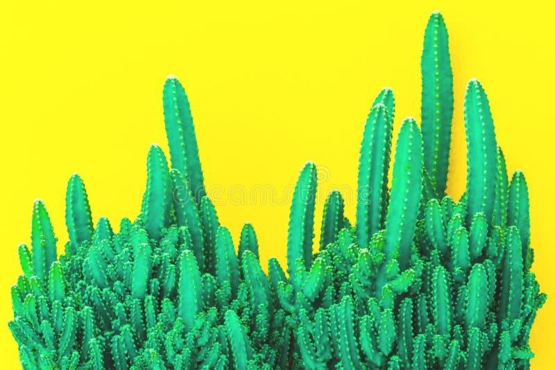 Cactus texturisé d'isolement sur le fond jaune images stock