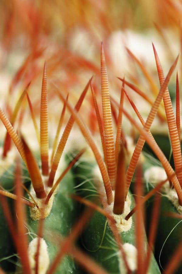 Free Cactus Thorns Stock Image - 5621711