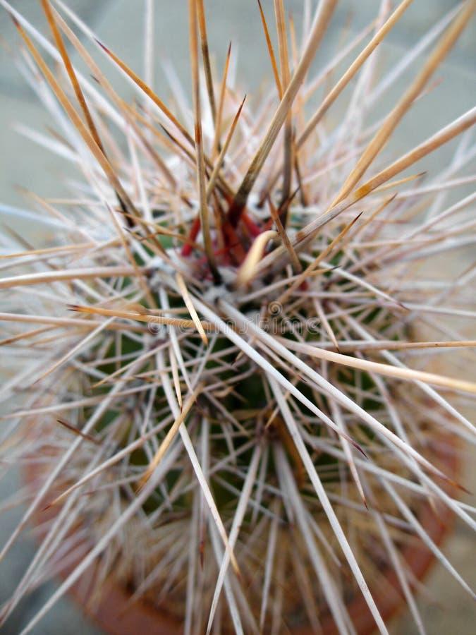 Free Cactus Thorns Royalty Free Stock Photo - 886565