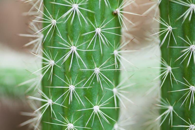 Cactus thorns background royalty free stock photos