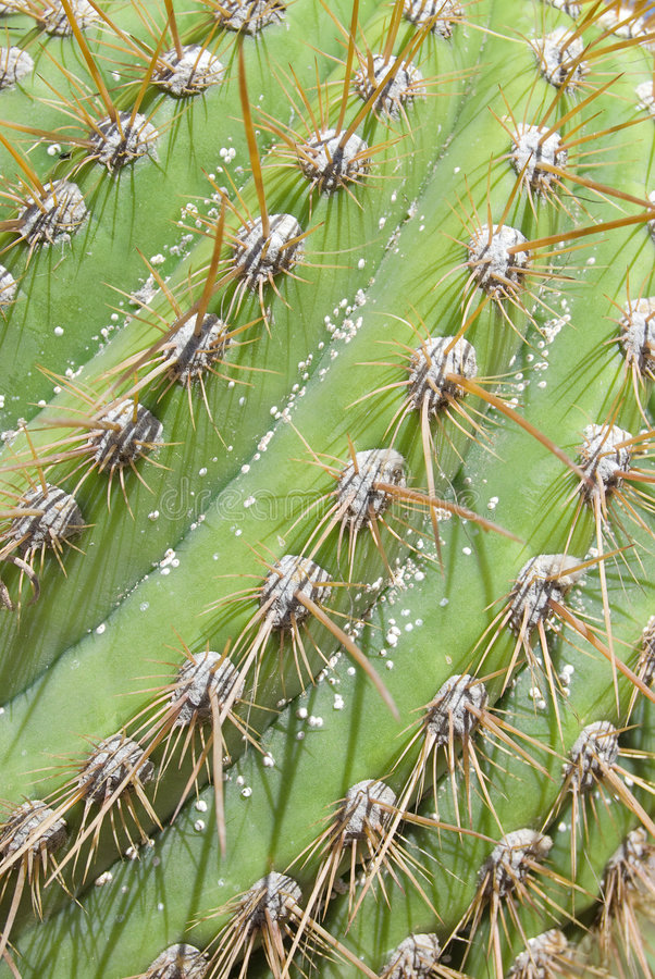 Download Cactus Thorns Detail stock photo. Image of background - 5382992