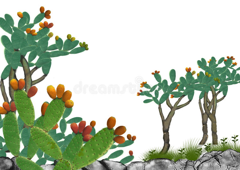 The cactus vector illustration