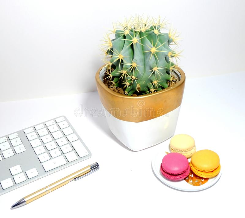 Cactus And Three Macaroons stock photography