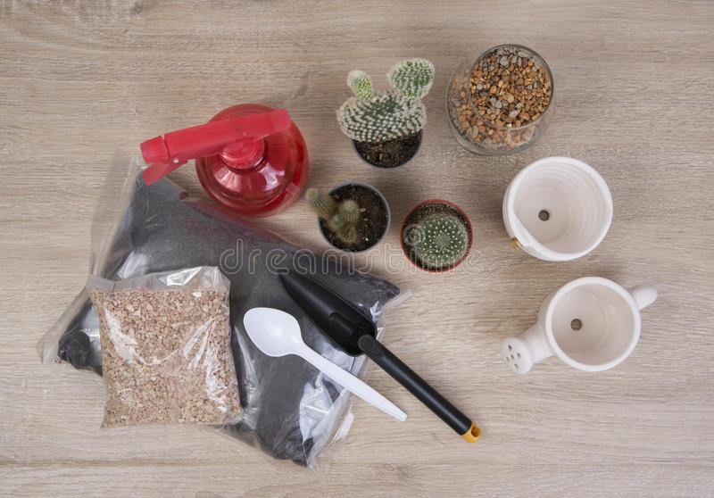 Cactus and tools. stock photo
