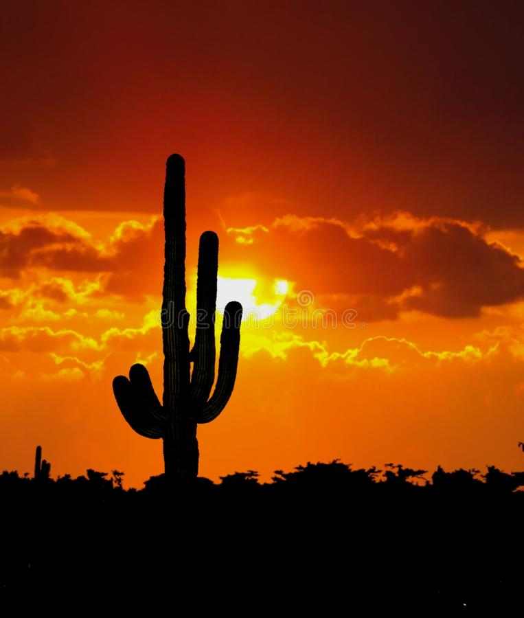 Cactus Tree during sunset. Image of cactus tree during sunset in the desert stock photos