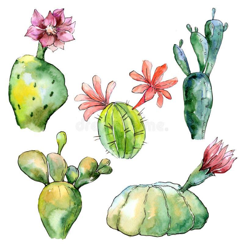 Cactus tropicale verde Fiore botanico floreale Wildflower selvatico della foglia della molla isolato illustrazione di stock