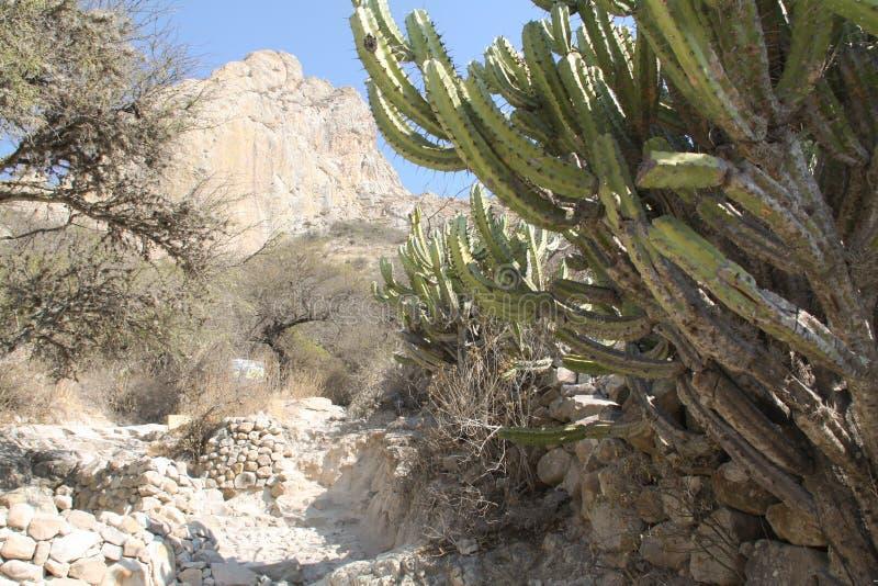 Cactus trouvé au Mexique central image stock
