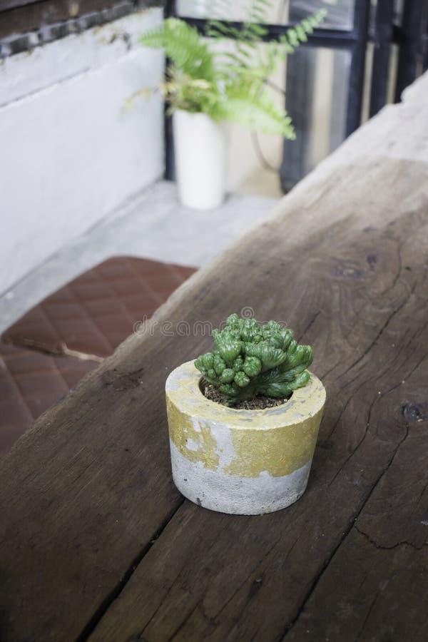 Cactus in vaso del cemento sulla tavola di legno fotografia stock libera da diritti