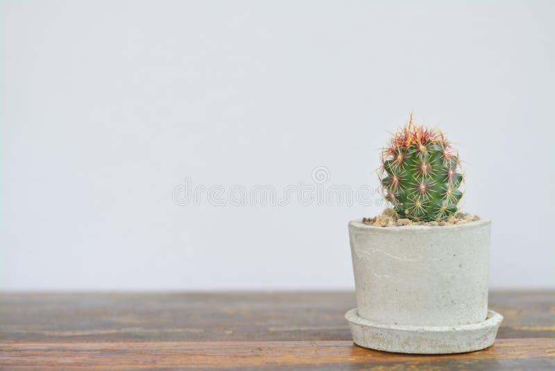 Cactus in vaso del cemento sulla tavola di legno immagini stock libere da diritti
