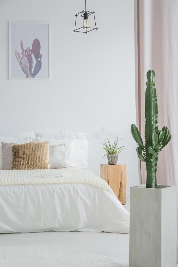 Cactus in vaso grigio fotografia stock