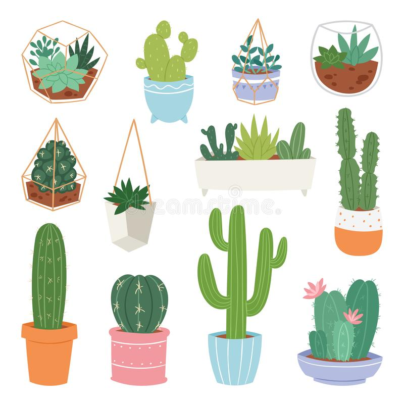 Cactus vector cartoon botanical cacti potted cute cactaceous succulent plant botany illustration isolated on white stock illustration