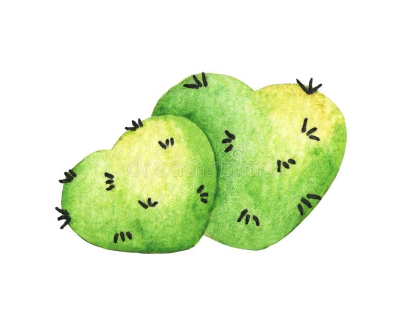 Cactus verde del cuore Illustrazione dell'acquerello illustrazione vettoriale