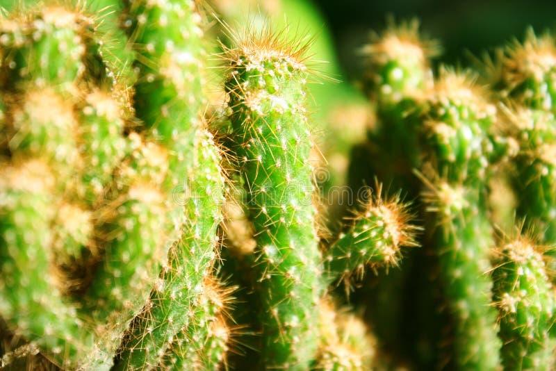 Cactus verde en fondo imagen de archivo