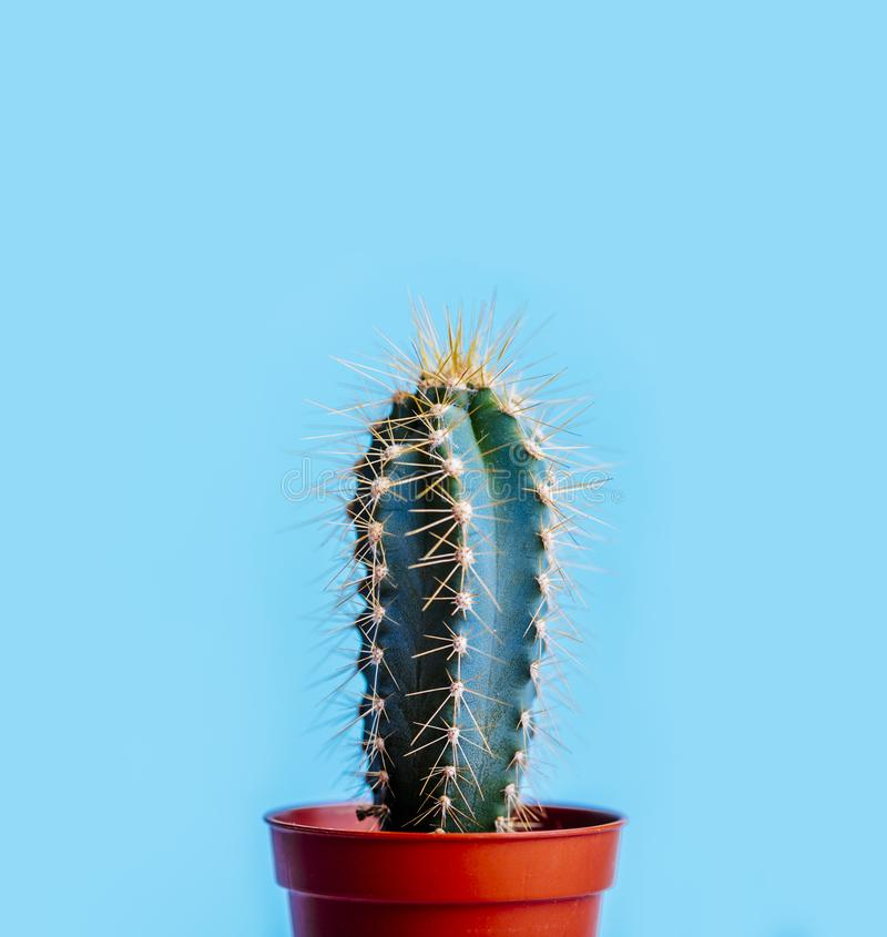 Cactus verde en pote de la decoración sobre fondo en colores pastel azul brillante Concepto creativo de moda del verano colorido imagen de archivo