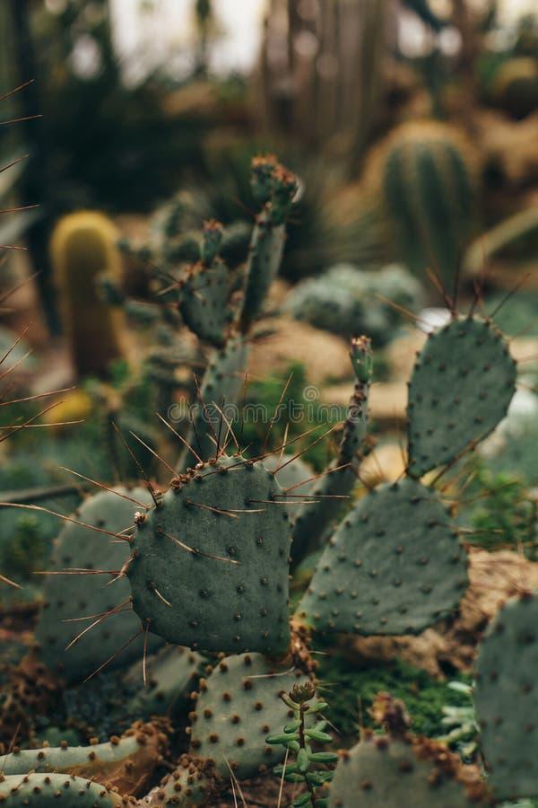 Cactus vert avec les torns pointus photographie stock