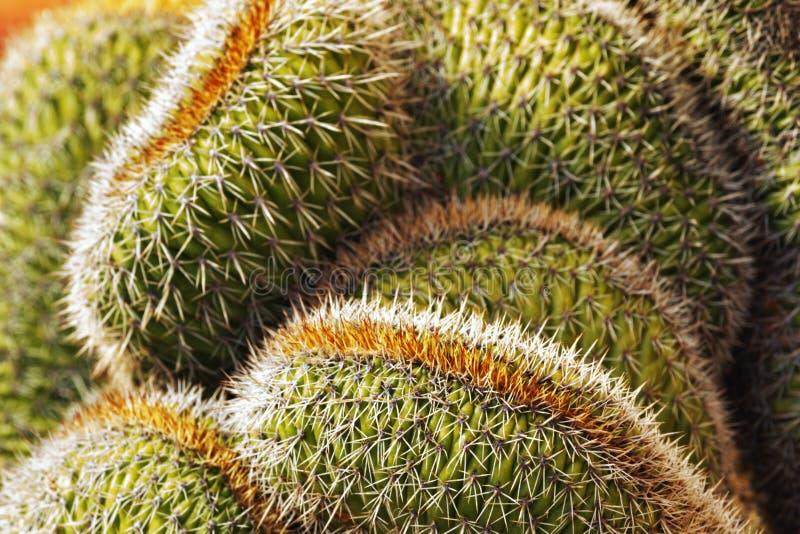 Cactus vicino su nel giorno soleggiato immagine stock libera da diritti