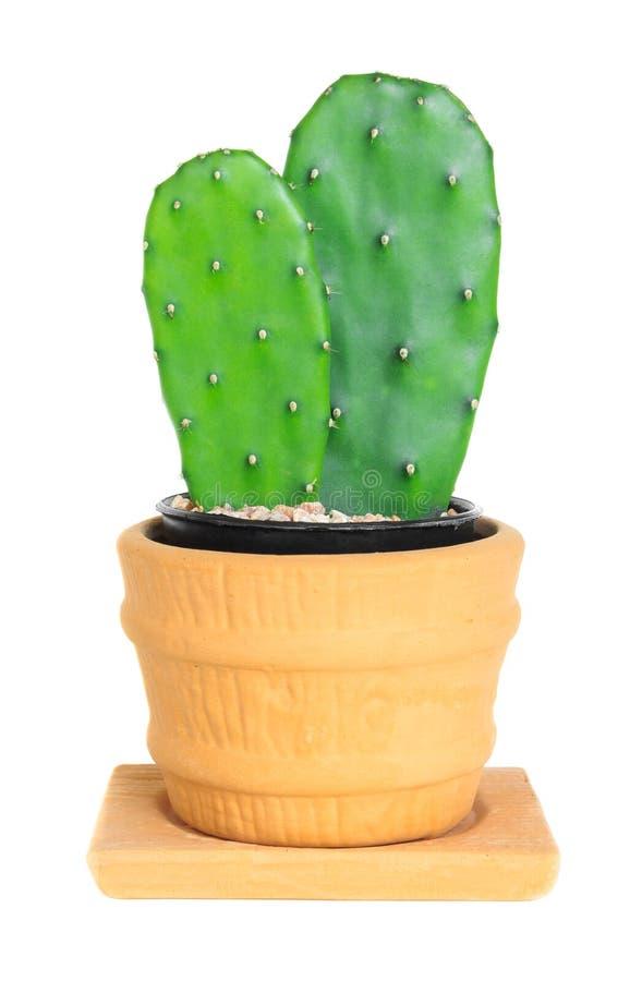Cactus (Vijgencactus) op geïsoleerde achtergrond (Cereus hexagonus Mil royalty-vrije stock fotografie