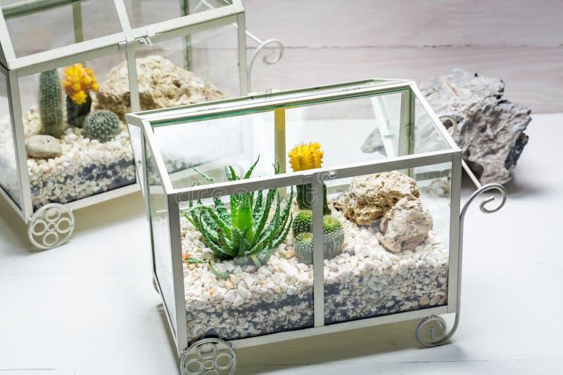Cactus vivo en un terrario con ecosistema del uno mismo imágenes de archivo libres de regalías