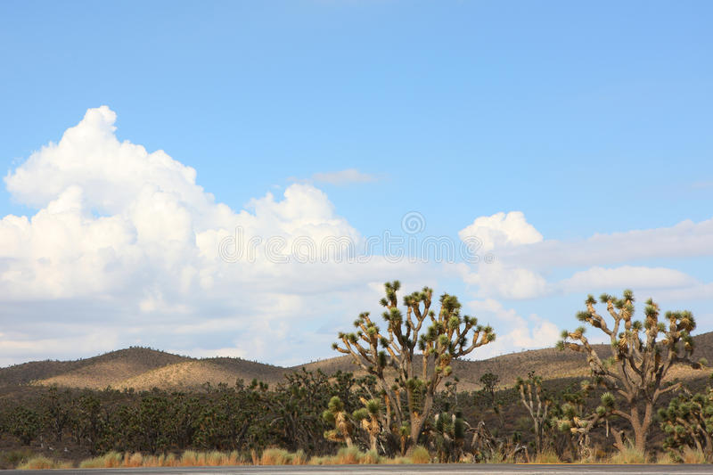 Download Cactus In Western United Statues Stock Photo - Image: 26479940