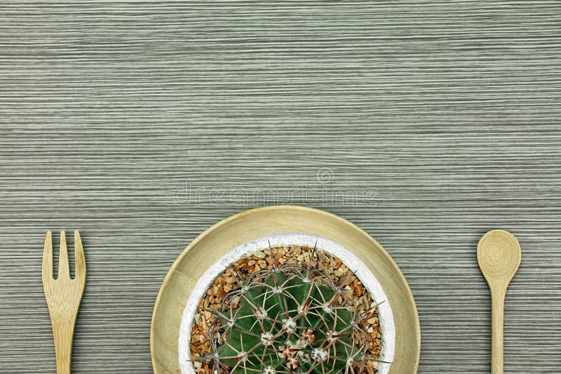 A cactus in white clay pot, Indoor plants with copy space. stock photography