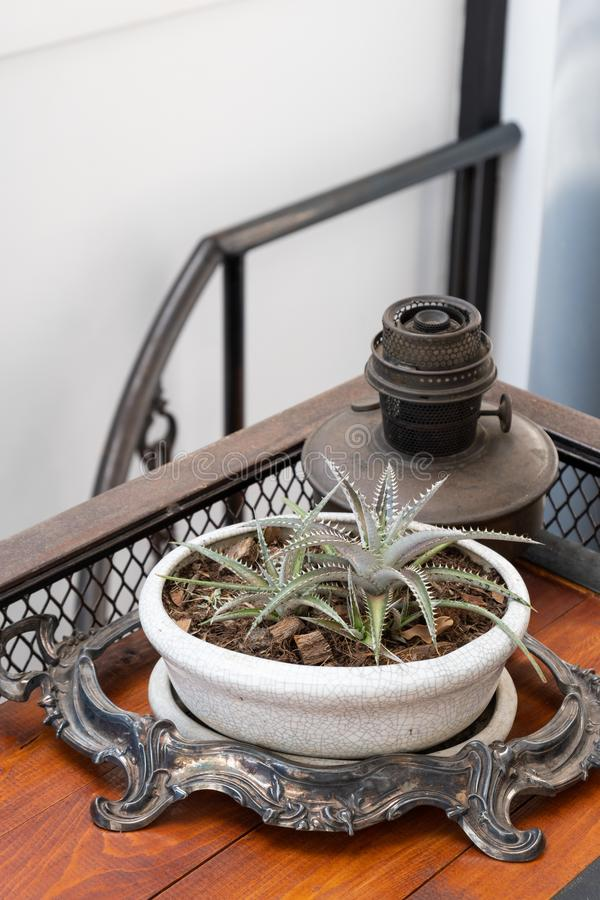 Cactus in white pot on wooden table, desert plant, prickly plant ,succulent plant. Copy space stock photo