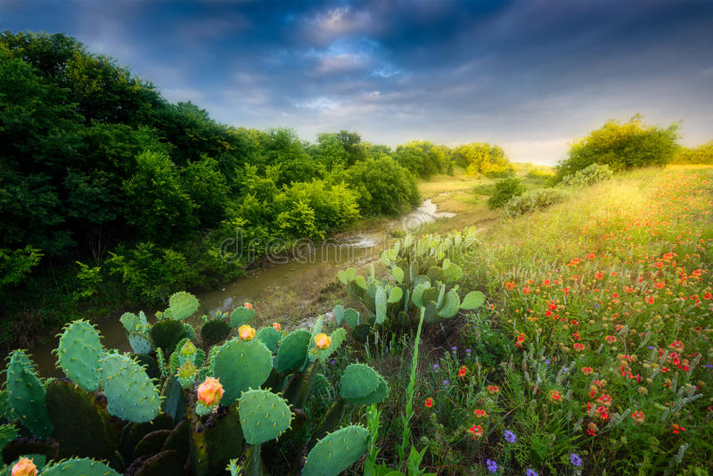 Cactus and Wildflowers at Sunrise royalty free stock images