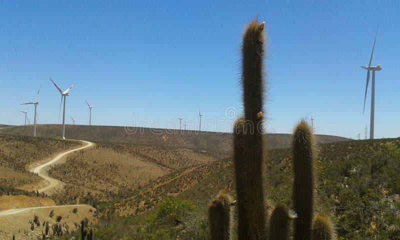 Cactus in wind farm stock images