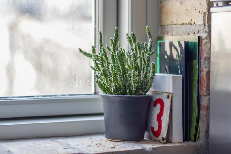 Cactus in the windowsill of bricks stock photos