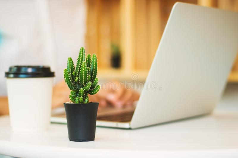 Cactus and women and laptops. stock image