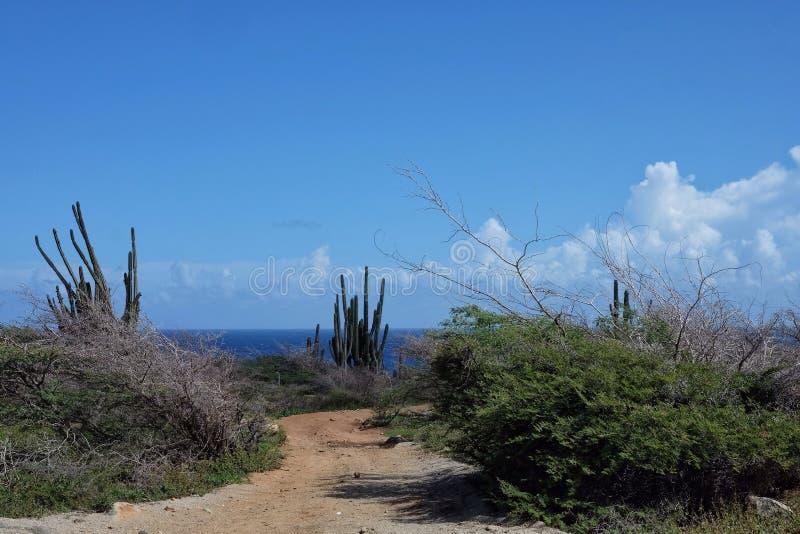 Cactus y cielos azules fotos de archivo