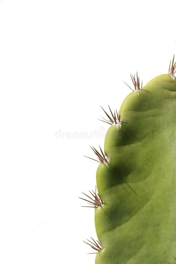 Cactus y espina fotos de archivo