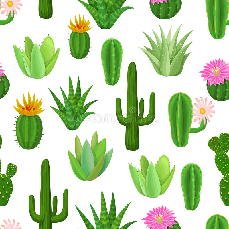 Cactus y modelo inconsútil suculento stock de ilustración
