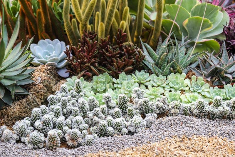 Cactus y planta suculenta en el jardín imágenes de archivo libres de regalías