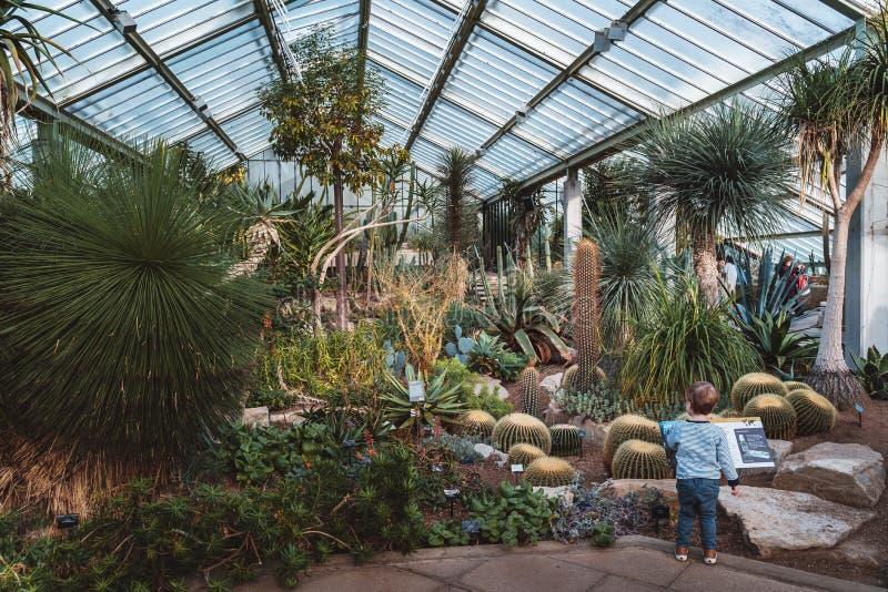 Cactus y plantas a partir de diez diversas zonas de clima en invernadero de la Princesa de Gales en los jardines de Kew foto de archivo libre de regalías