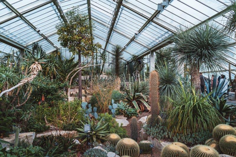 Cactus y plantas a partir de diez diversas zonas de clima en invernadero de la Princesa de Gales en los jardines de Kew imagen de archivo libre de regalías
