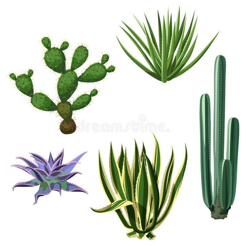Cactus y succulents fijados Plantas del desierto stock de ilustración