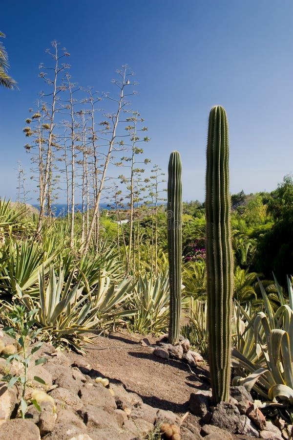 cactus4 obrazy stock
