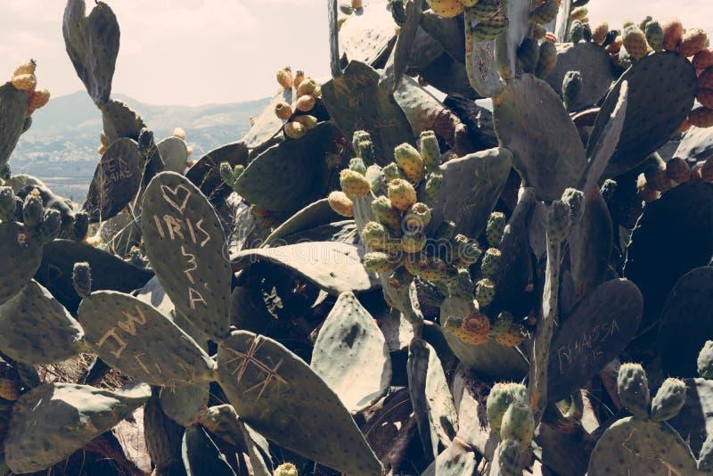 Cactusachtergrond/achtergrond, Kreta Griekenland royalty-vrije stock afbeelding