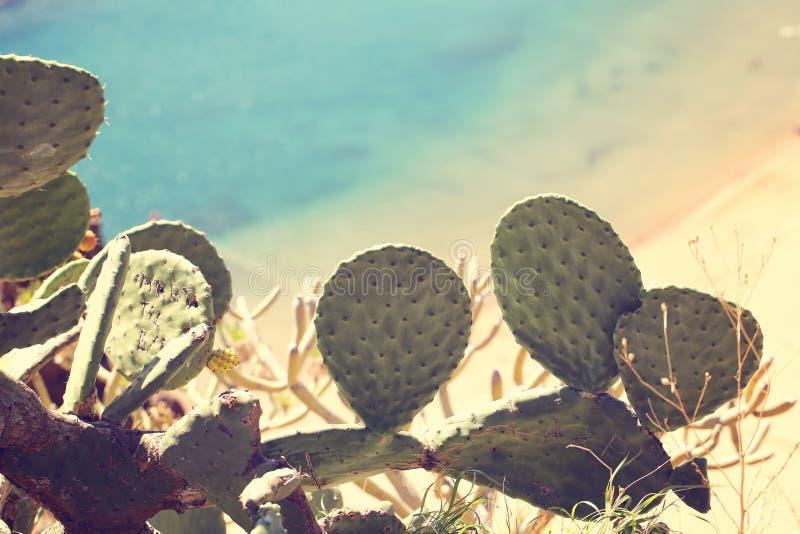Cactusbladeren royalty-vrije stock afbeeldingen
