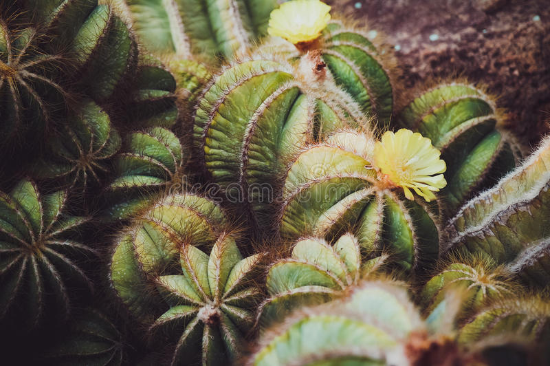Cactusbloem 2 royalty-vrije stock foto's